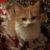 Рисунок профиля (Mother of Cats)